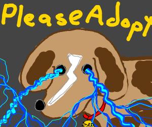 Shocking Brown Puppy