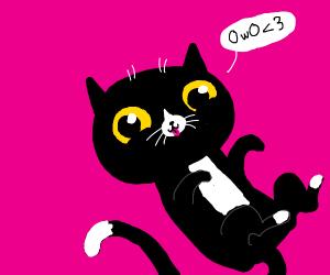 black owo cat