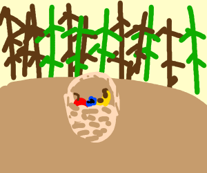 Fruit basket in a forest clearing