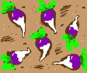 Six turnips