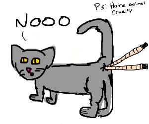 Cat hates having chopsticks up their butt