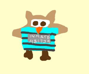 Delinquent owl