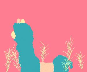 Shaving a llama