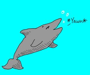 Dolphin Yawning