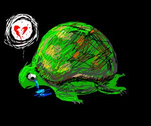Turtle needs love