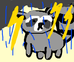 Raccoon in a Thunderstorm