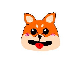 Cute Shiba