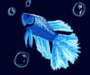 A beautiful blue tropical fish