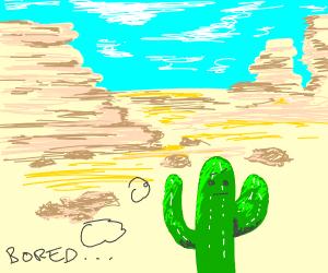 A bored cactus