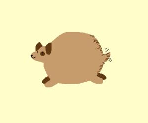 Round puppy