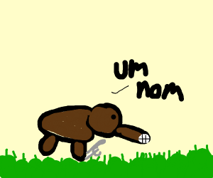 An anteater trying to eat grass