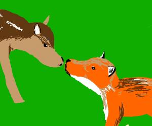 Fox fawn
