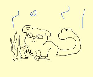 Monkey threatening sea weed