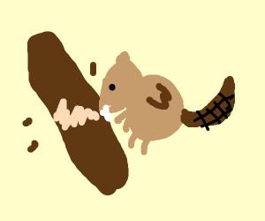 its a beaver...eating wood...