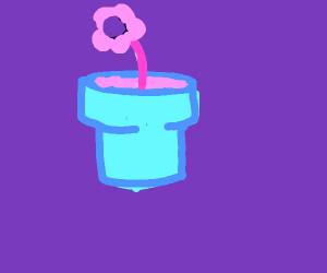 Flower in a flower pot