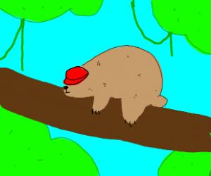 very lazy bear sleeps with a hat ona tree