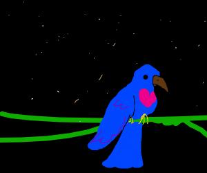 dope humming bird