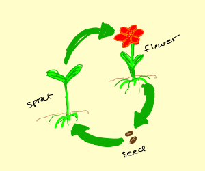 flower cycle of life