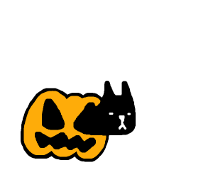 Cat poking out of a pumpkin