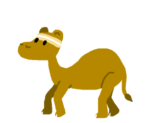Camel with a headband