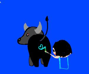 a bull getting a tattoo
