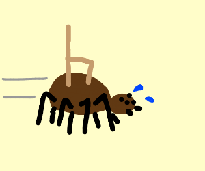 Tarantula jogging with a Chair