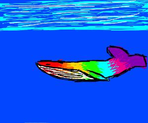 rainbow fish/wale