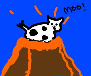 Cow in volcano