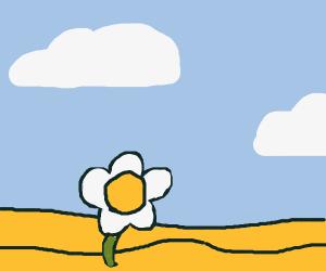 A poppy growing in the desert