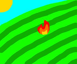 A fire in a field