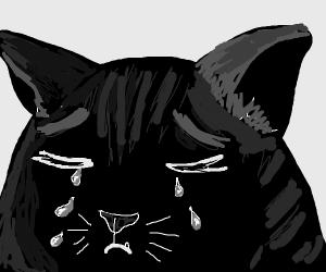Sad cat crying
