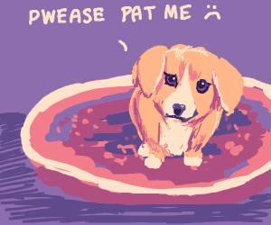 dog wants pats