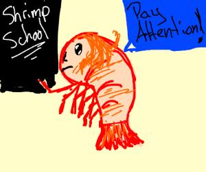 Shrimp Teacher