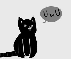 Cat says UwU