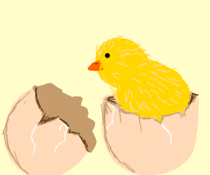 baby chicken coming out an egg