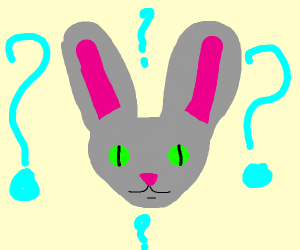 Confused cat-rabbit hybrid