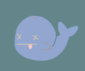 A dead whale