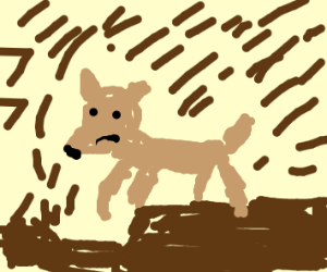 Dog digging into the Road
