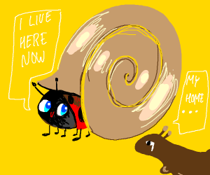 Ladybug wants to live in a snail shell