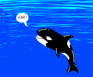 Orca saying yay