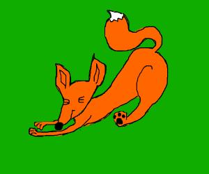 Cute Fox stretching