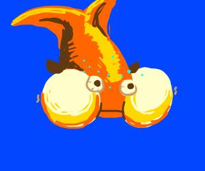 THICC goldfish