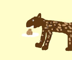 Leopard eating a Dumpling