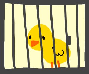 duck in jail