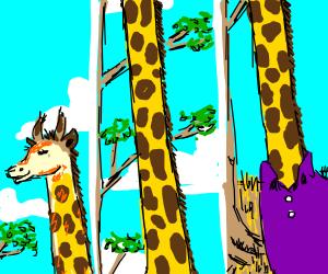 giraffe with purple shirt