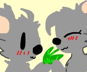 koalas sharing leaves