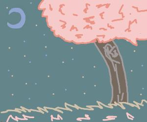 those pink japanese trees