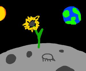 Sun flower on the moon