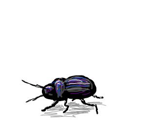 a shiny beetle