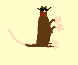 Cool Ferret